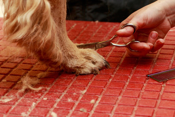 Grooming the hair of dog