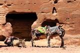 Donkeys Of Petra in Jordan