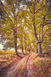 Picture of a scenic road in autumn, vintage toning applied.