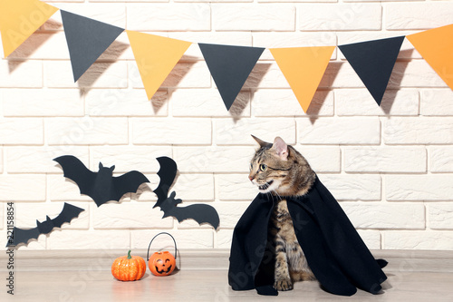 Foto Murales Grey cat with pumpkins and black paper bats on brick wall background