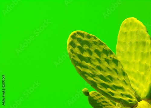 Leinwandbild Motiv Indian fig, cactus pear (Opuntia ficus-indica, Opuntia ficus-barbarica)