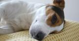 Dog lying on sofa at home - 221174095