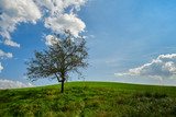 lonely apple tree on green hill - 221177486