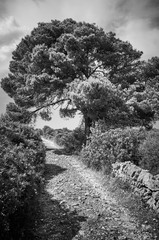Black and white picture of a scenic narrow countryside road, Mallorca, Spain