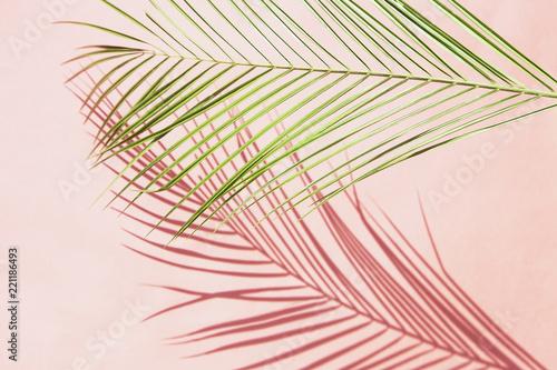Palm leaf - 221186493