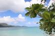 Leinwanddruck Bild - Grüne Blätter auf einem Hintergrund von einer Meer-Landschaft
