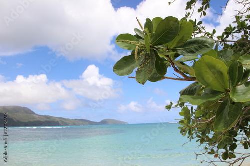 Leinwanddruck Bild Grüne Blätter auf einem Hintergrund von einer Meer-Landschaft