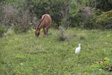 Ein Esel grast auf der Wiese