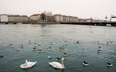 Birds in the river Rhone. © German S