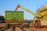 Combine harvester unloading wheat in agricultural field in Somerset - 221236838