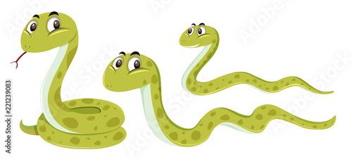 Wąż o innej pozycji