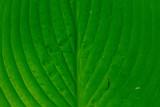 Closeup of Leaf - 221280227