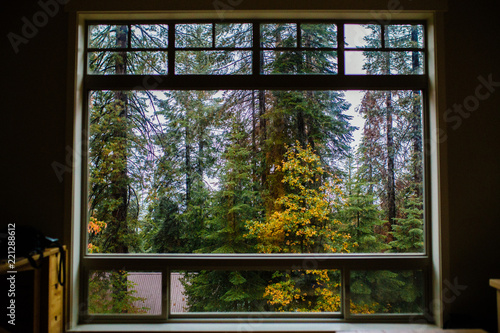 Window with forest view - 221288612