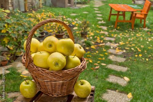 Żółci jabłka w łozinowym koszu w ogródzie