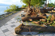 台風被害 樹木の倒壊