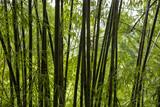 竹やぶのシルエット
