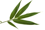 Green bamboo leaf isolated on a white background