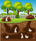 Rabbit digging the hole - 221313269