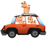 Dogs riding a car on white background - 221315419
