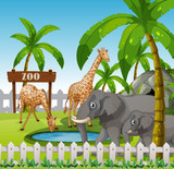 Giraffe and elephant at the zoo - 221316041