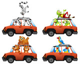 A set of animals in car - 221317097