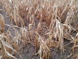 Dürre und Hitzewelle - 221319469