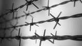 Sharp barbed wire fence spread around potentially dangerous zones or places encompassed with the special monitoring obligation. Additional protection for possible elopements of prisoners. Loopable. HD - 221326212