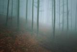 Misty mountain beech forest landscape.  - 221326896