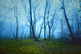 Fantasy saturated foggy forest background. Color filter effect used. - 221326899