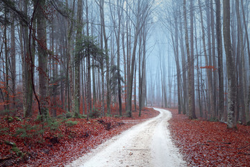 Fall season foggy forest trees with road.  © robsonphoto