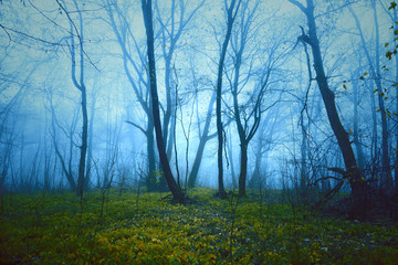 Fantasy saturated foggy forest background. Color filter effect used. © robsonphoto