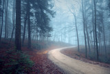 Foggy autumn seasonal forest road. Magic blue light in the woodland. - 221327025