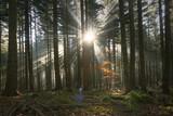 Magical sun rays through autumn season forest landscape. - 221327071