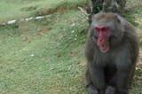 Iwatayama Monkey Park: Close-Up eines Affen - 221334403