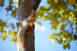 Squirrel on the tree - 221335268