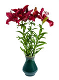 A bouquet of red day lilies in a vase. Isolated on white background.
