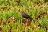 Small brown bird on green ground cover - 221341265