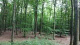 Beech_Forest.mov - 221348661