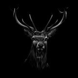 Portrait of a deer head on a black background