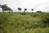 африканский пейзаж - 221360082