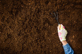 Woman hand planting a plant on a natural, soil backgroud. Camera from above, top view. Natural background for advertisements. - 221364850