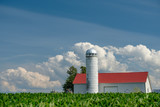 Amish farm storage silo and homestead  sit behind rows of planted, fresh corn as birds fly around looking for scraps - 221368037