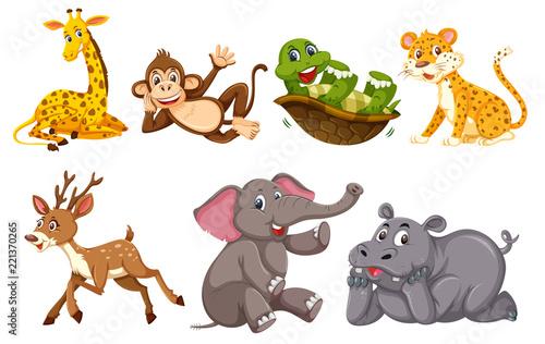 Fototapeta A set of wild animals