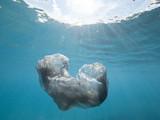 Single use Plastic Bag in Ocean - 221371423