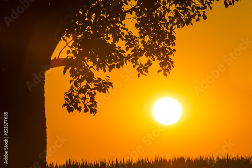 sunset in summertime with tree - 221377685