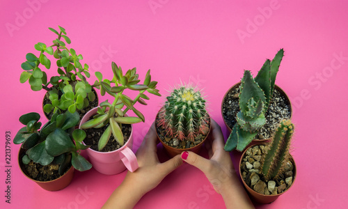 girl is holding a pot with a cactus on a pink background - 221379693