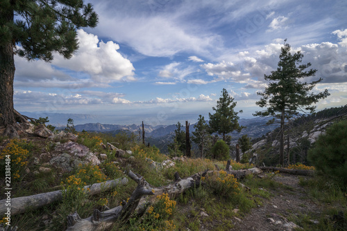 A view across the Tucson valley from the summit of Mt. Lemmon, Arizona. - 221381484