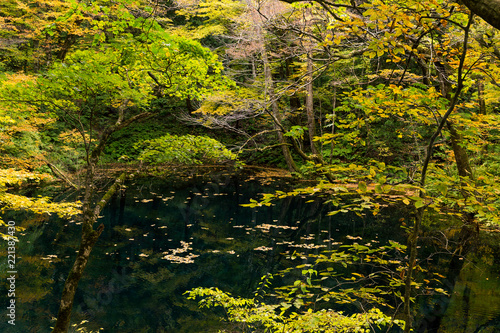 Autumn Lake and forest