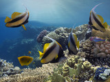 Tropical fishes and corals reef in ocean - 221408840