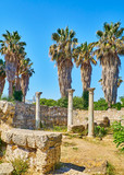Remains of Harbour Basilica at Ancient Agora of Kos. South Aegean region, Greece. - 221410075